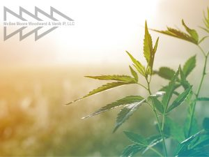 hemp plant on a meadow